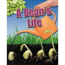 A Beans Life - Crabtree Connections