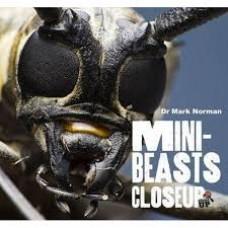 Mini Beasts - Close Up