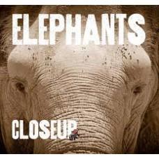 Elephants - Close Up