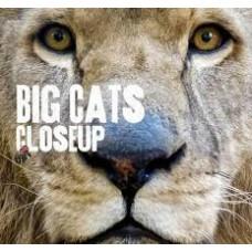 Big Cats - Close Up