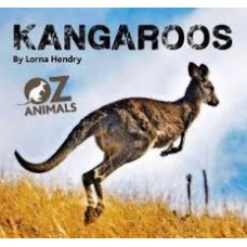 Kangaroos - Oz Animals