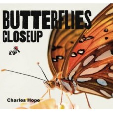 Butterflies - Close Up
