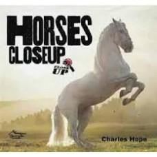 Horses - Close Up