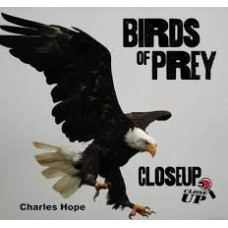 Birds Of Prey - Close Up