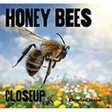 Honey Bees - Close Up