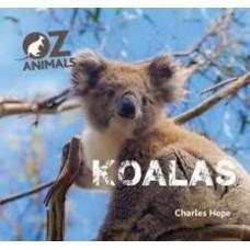 Koalas - Oz Animals