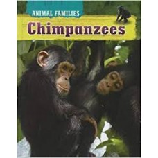 Chimpanzees - Animal Families