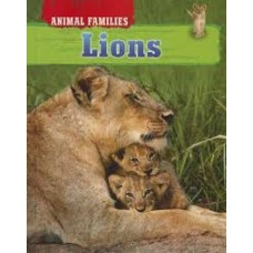 Lions - Animal Families